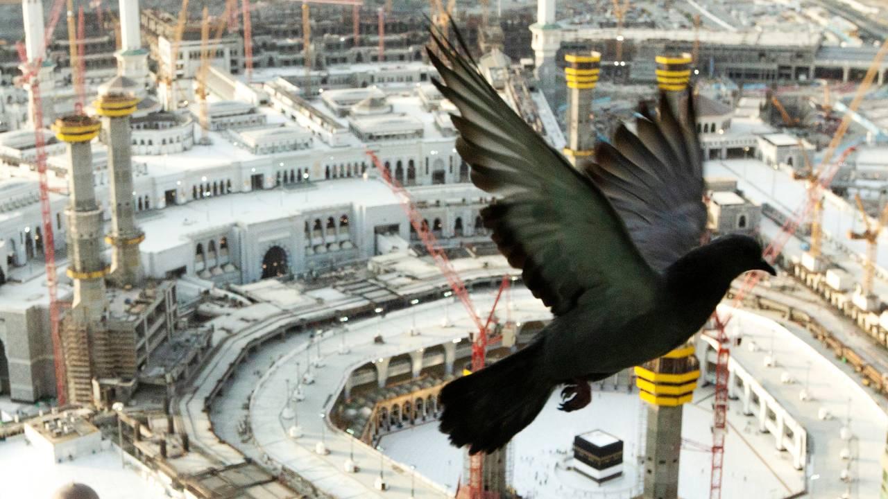 Saudi Arabia Hajj Due
