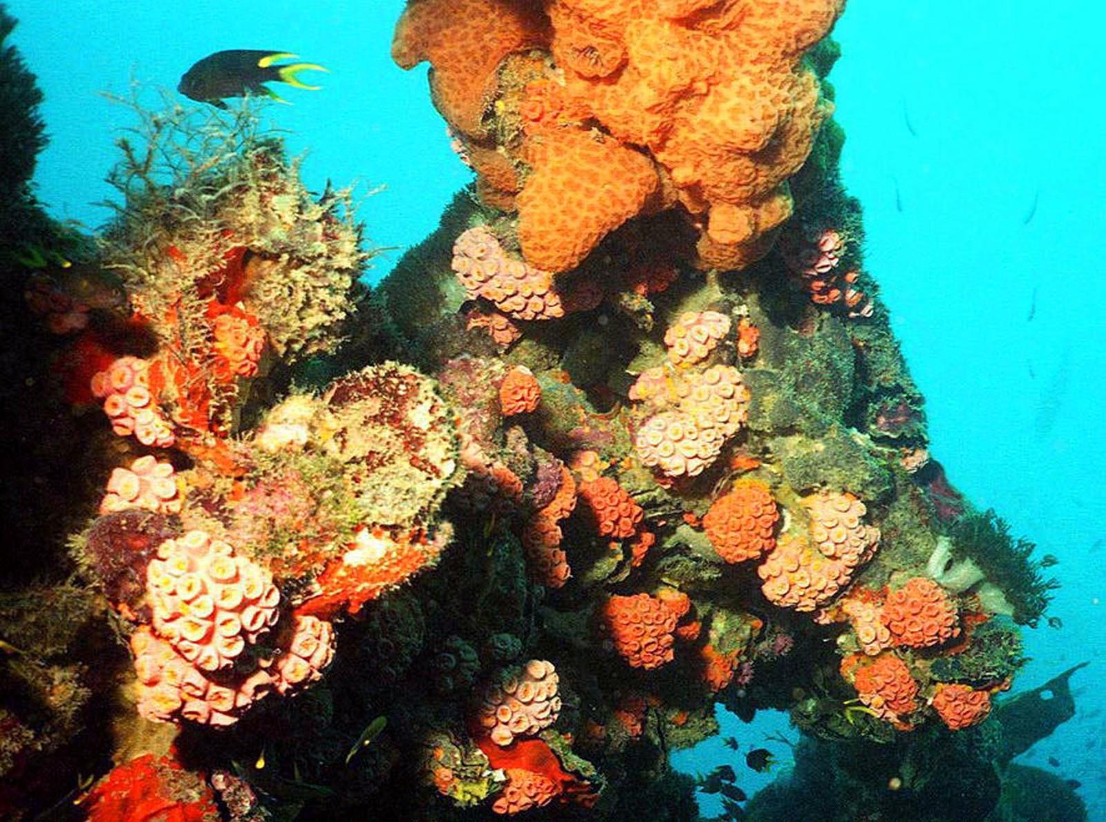 Et bilde fra 1998 viser korallrev utenfor Queensland i Australia. De over 2.900 revne Great Barrier Rief består av, mistet fargen som følge av varmere hav i 1998, 2002. I 2016 har minst halvparten av verdens største korallrev mistet fargene.