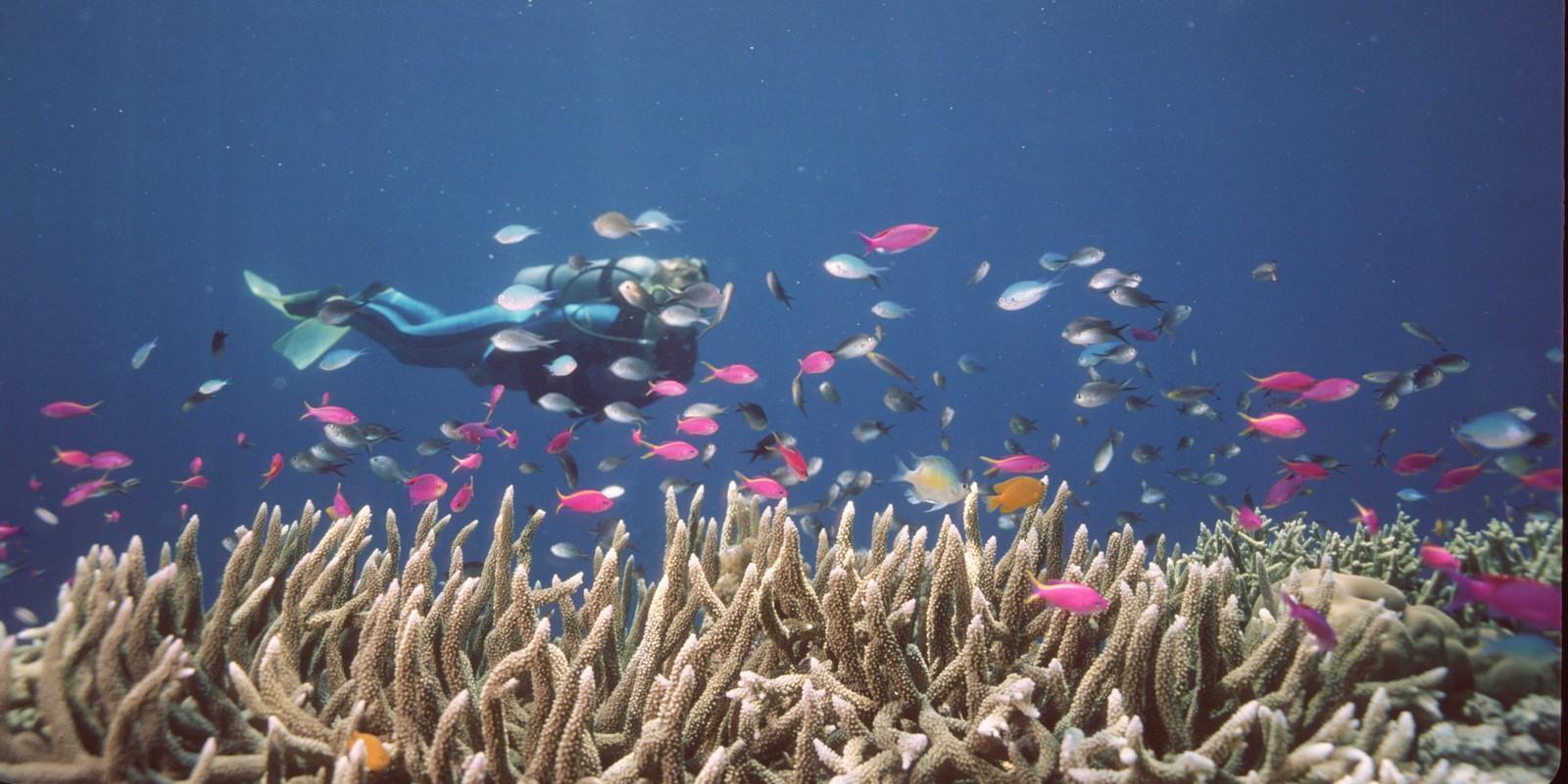 1.500 arter fisk, seks arter sjøskilpadde og 30 arter delfiner, hvaler og niser lever rund Great Barrier Reef. Forskere frykter arter kan dø ut hvis korallene i revet ikke får fargene tilbake.