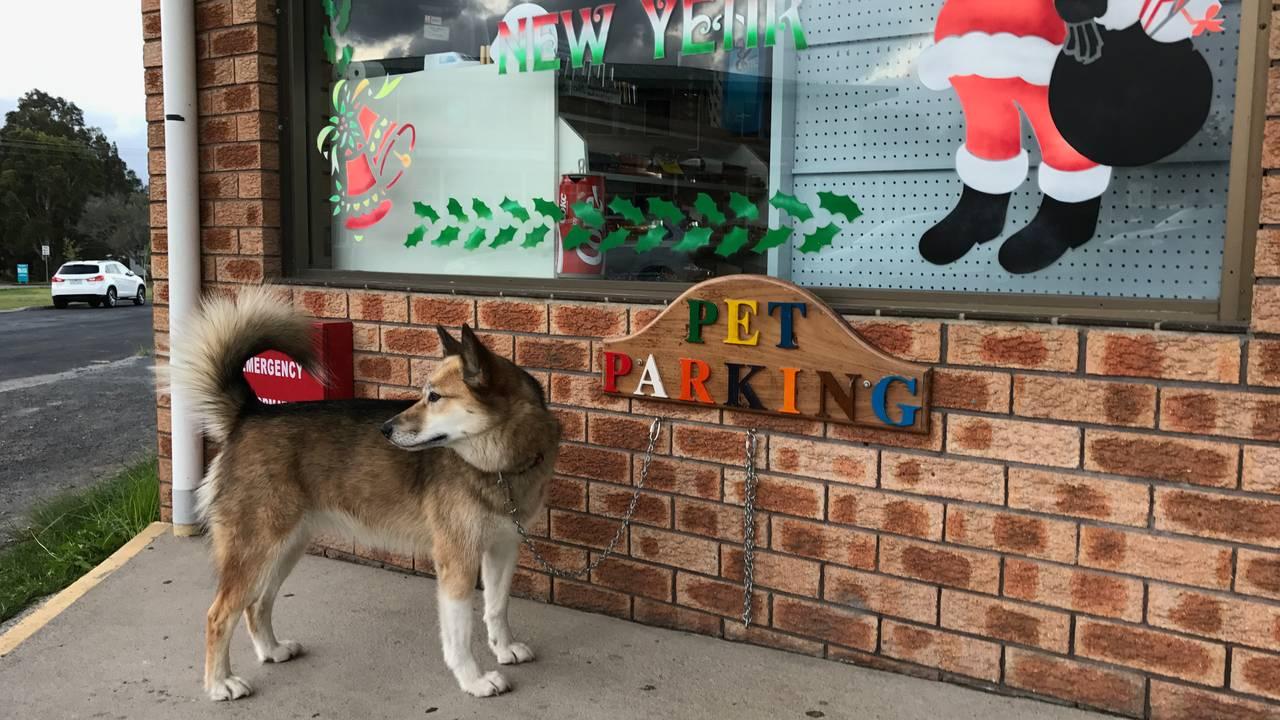 Cat parkert foran butikk i AUstralia
