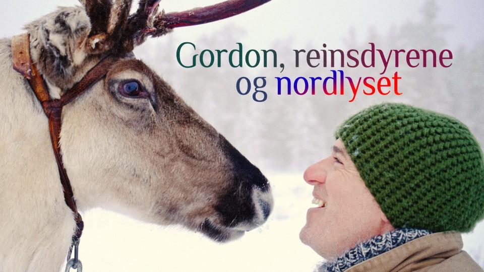 Gordon, reinsdyrene og nordlyset