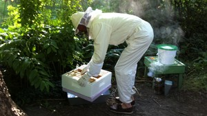Ut i naturen: Tøffe tider for blomsten og bia