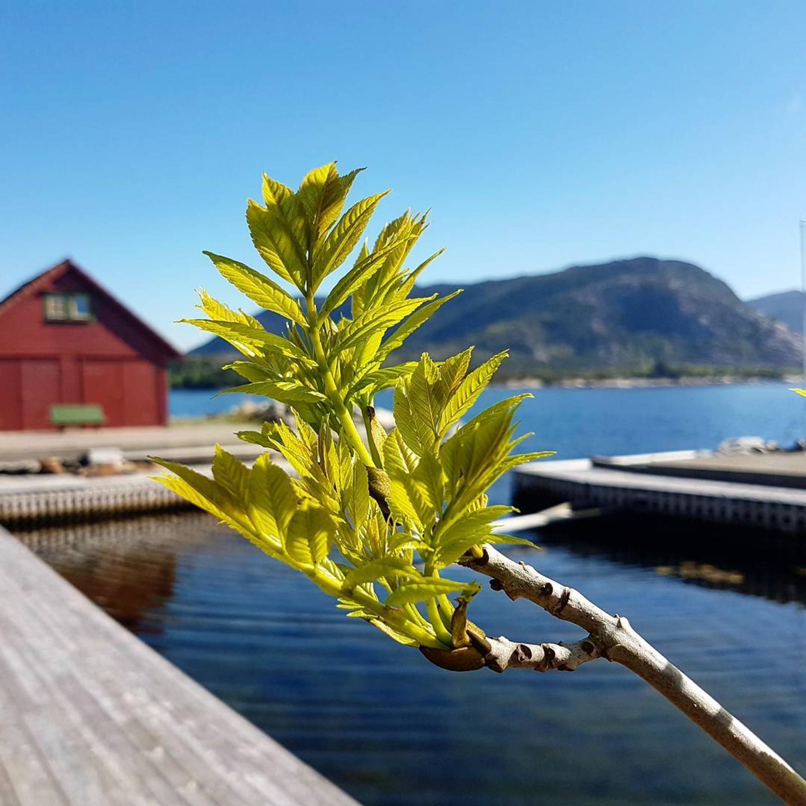 Fra Hervik i Tysvær.