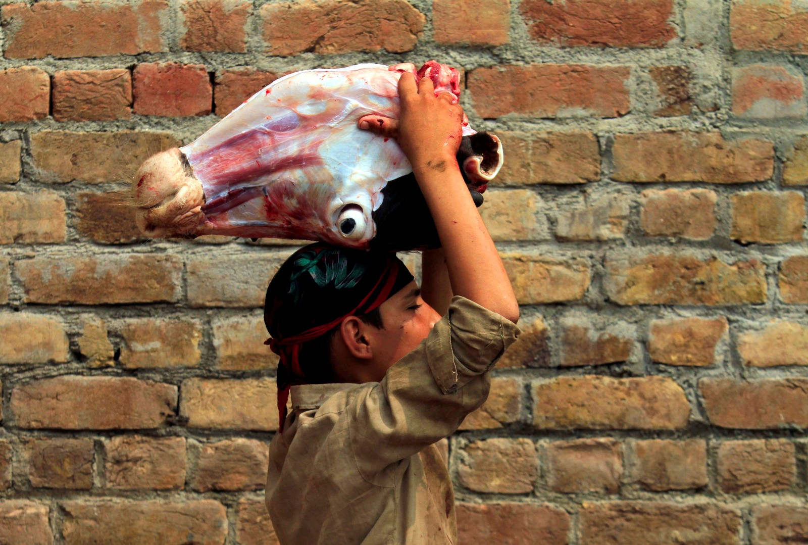 Kuhodefrakting på et slakteri i Peshawar i Pakistan.