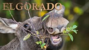 Elgorado