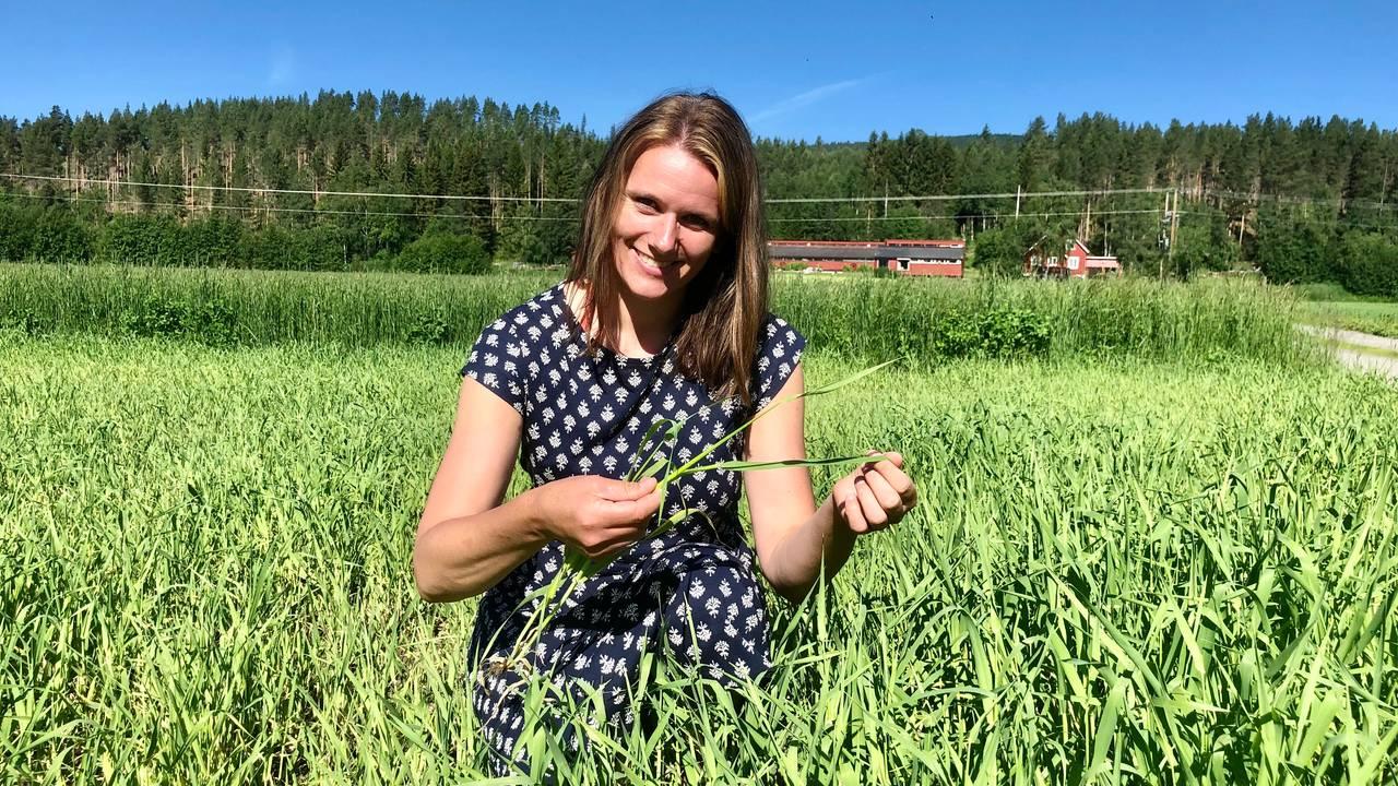 Ingrid Falkum Gardseth på Telneset i Tynset tar opp et kornstrå med bygg, som skal høstes om en måneds tid.