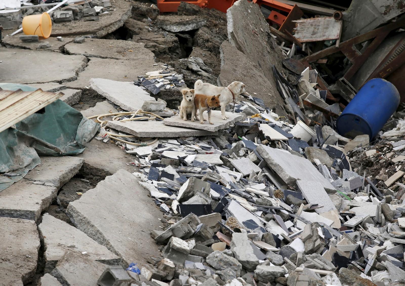 To små hunder står på ruinene av industriparken som ble tatt av jordskredet.
