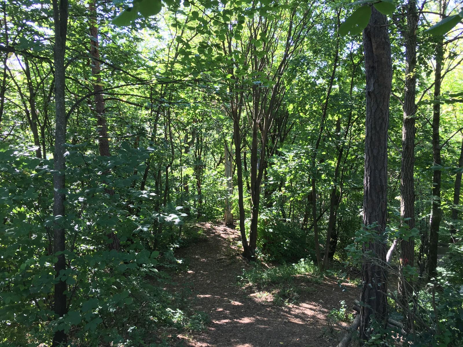 Skogen der Bjarne Melgaard vil bygge dødshuset. Per Maning kaller den Munch-skogen, byantikvaren Hakkebakkeskogen.