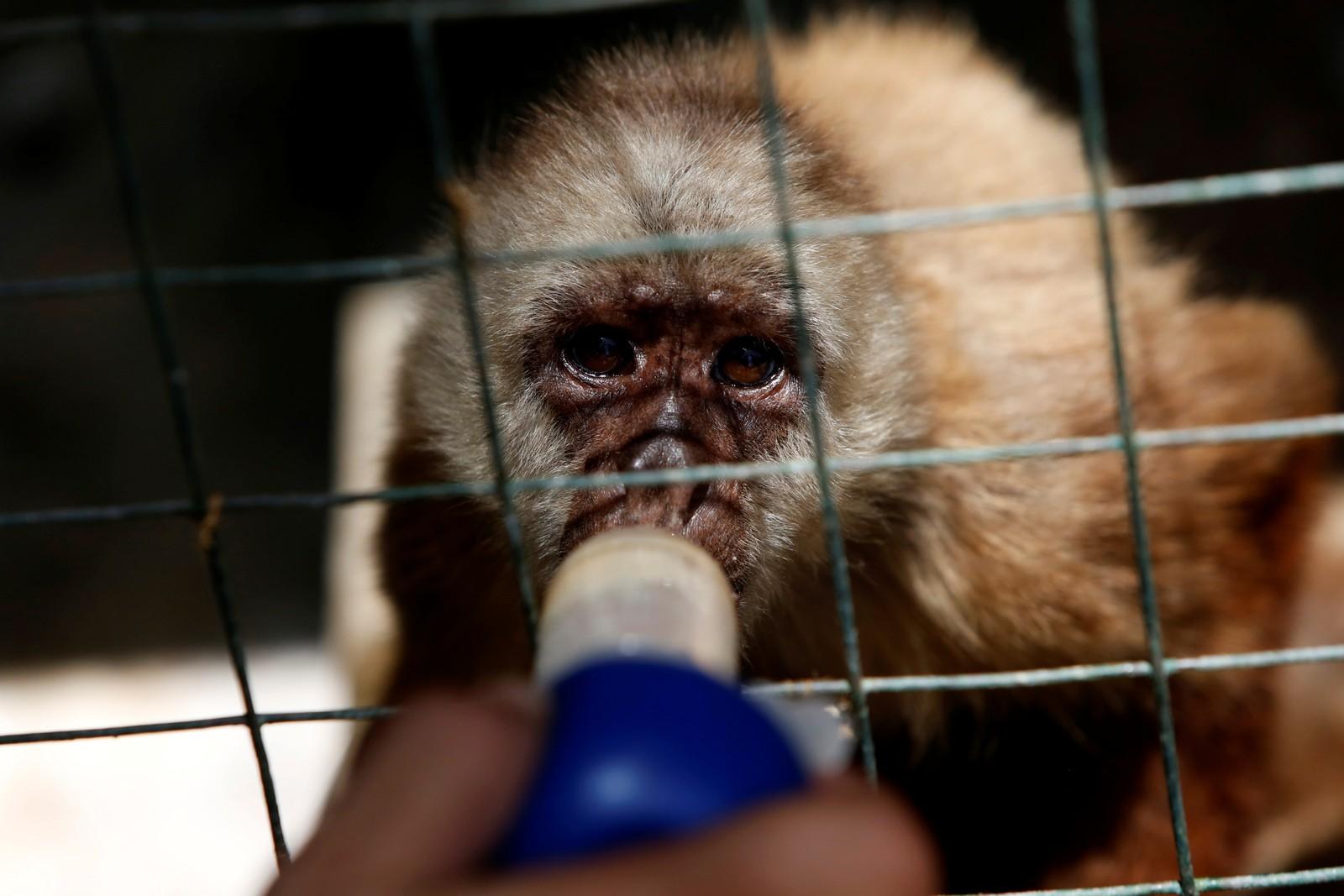 Dyrene i Venezuelas hovedstad Caracas merker matkrisen landet befinner seg i. Den siste måneden har flere dyr dødd av sult.