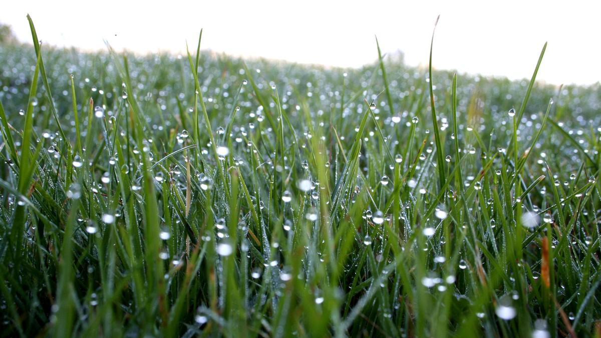 Regndråper i gresset - Foto: Linda Bjørgan