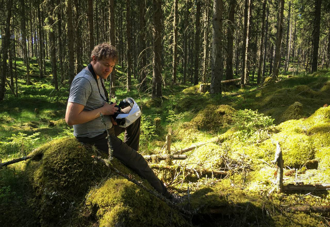 André sitter i skogen for å observere insekter. Skogen er tett. Der han sitter er det en lysning. Sola titter frem, og bakken er mosekledd.