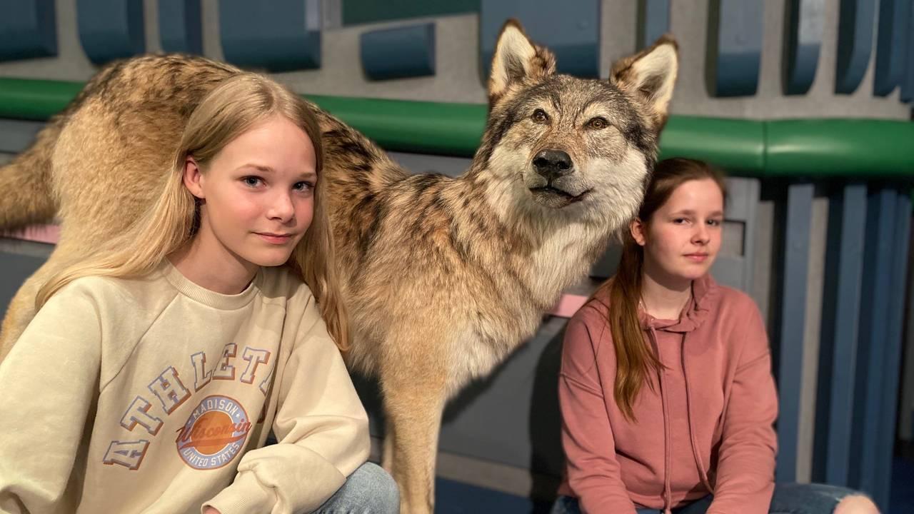 Andrea Angeline Gran og Majken Kiønig ved snill ulv på Skogmuseet