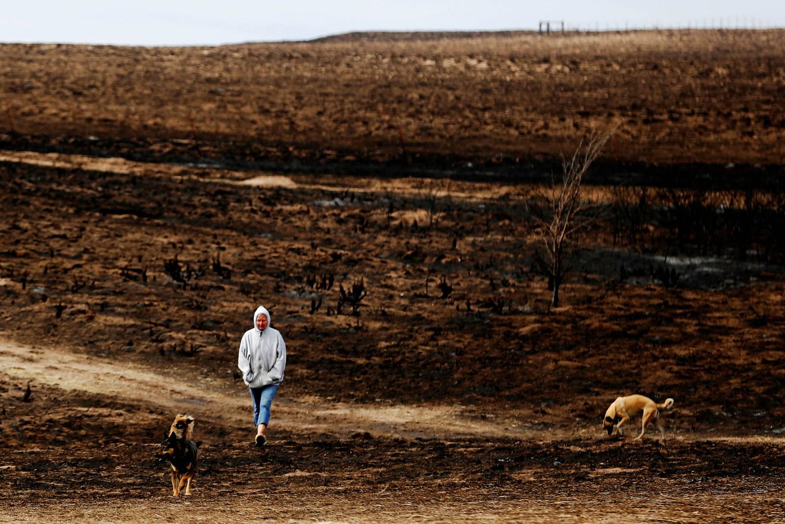 Nancy Schwerzenbach går tur med hundene sine i et område nær Lipscomb i Texas som har vært rammet av skogbrann.