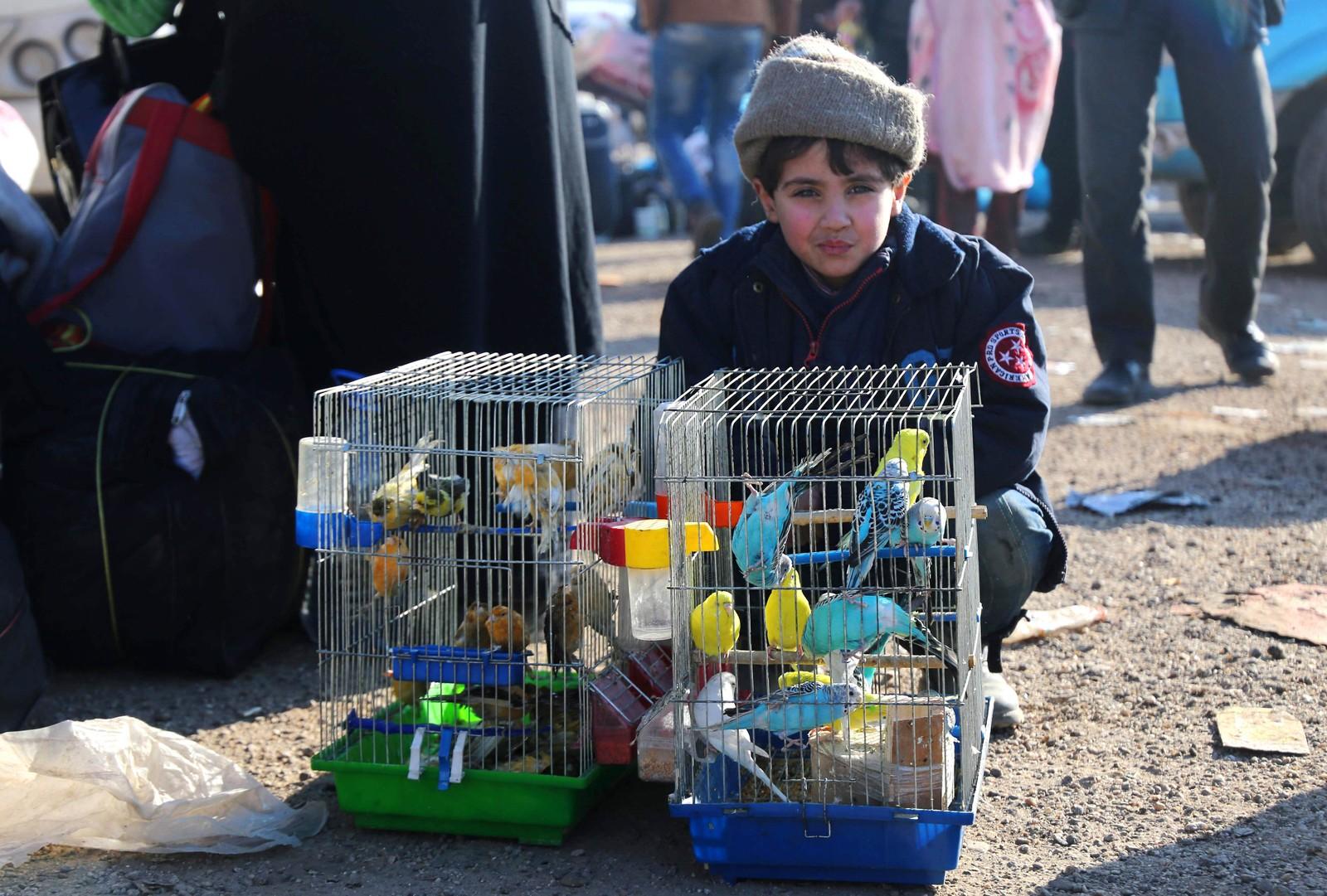 En syrisk gutt, som har blitt evakuert fra Aleppo sammen med fuglene sine, sitter og venter i Khan al-Assal.