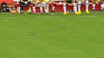 Kampen mellom Sao Paulo og Joinville fikk en uventet pause da en fuglefamilie entret banen. Det var en U20 Copa do Brasil-kamp.