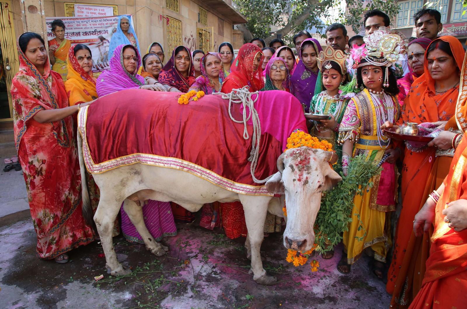 Indiske hinduer utkledd som gudene Krishna (tredje f.v.) og Radha (fjerde f.h.) markerer Gho Puja - ofring av ku. Det hele er en del av Gopal Ashtami - feiringen av da Krishna fikk lov å gjete kuer for første gang av sin forster Nanda.