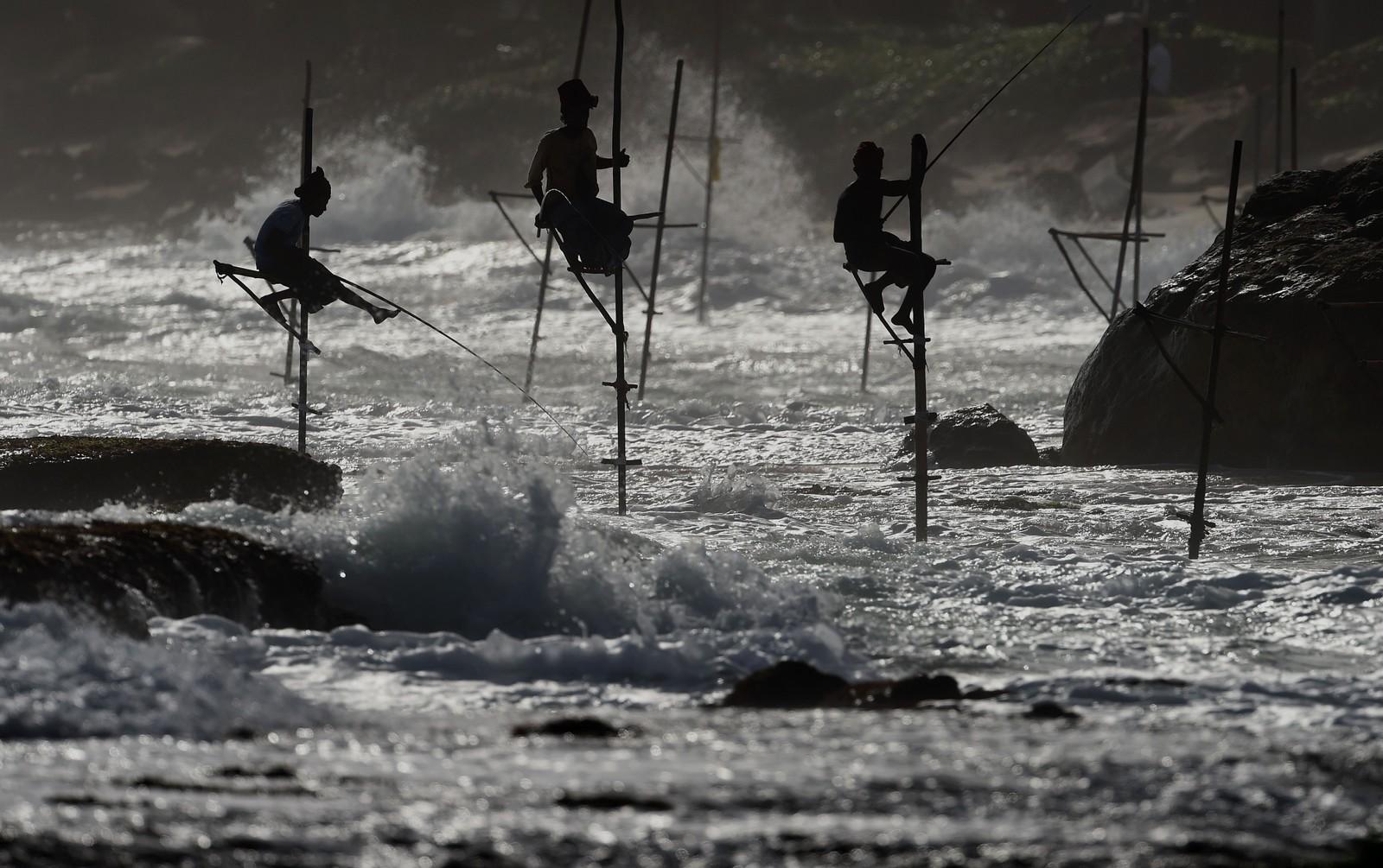 De jobber på påler, de srilankiske fiskerne. Det sies at tradisjonen starta etter andre verdenskrig, da det var lite mat og mange som kjempa om fiskeplassene på land. Nå tjener de også penger på å la turister prøve seg.