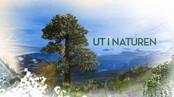 Ut i naturen: I villreinfjell og ørretvann
