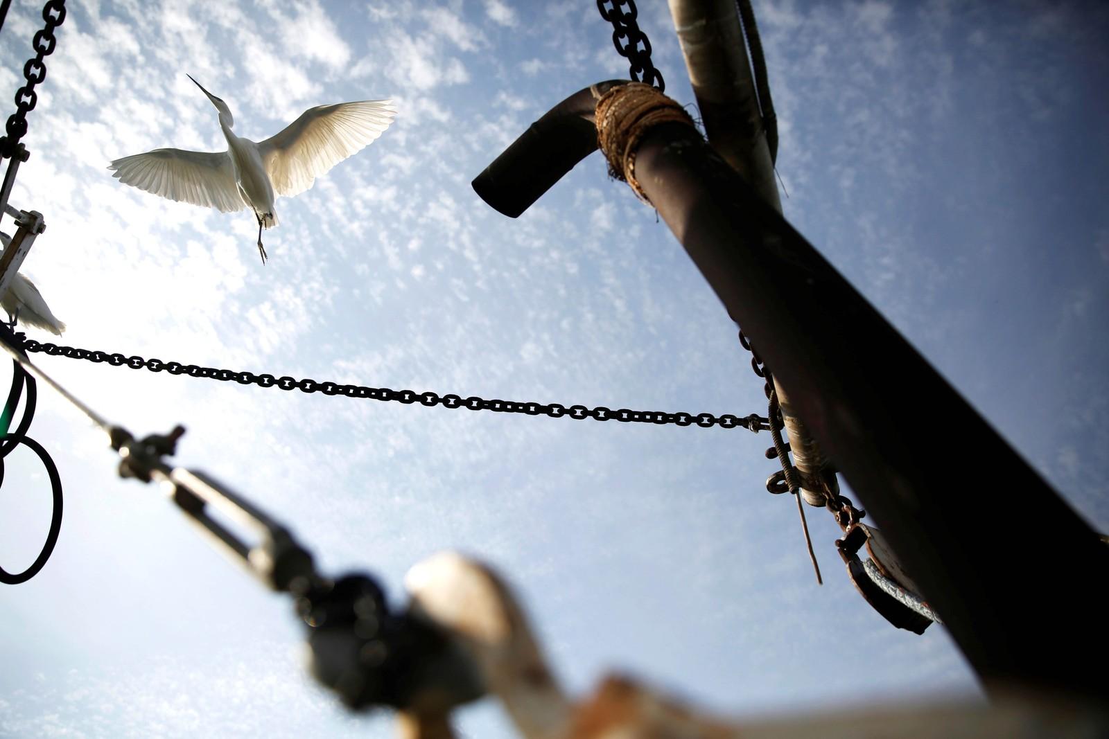 En egrettherge flyr over en fiskebåt i Genesaretsjøen i Israel.