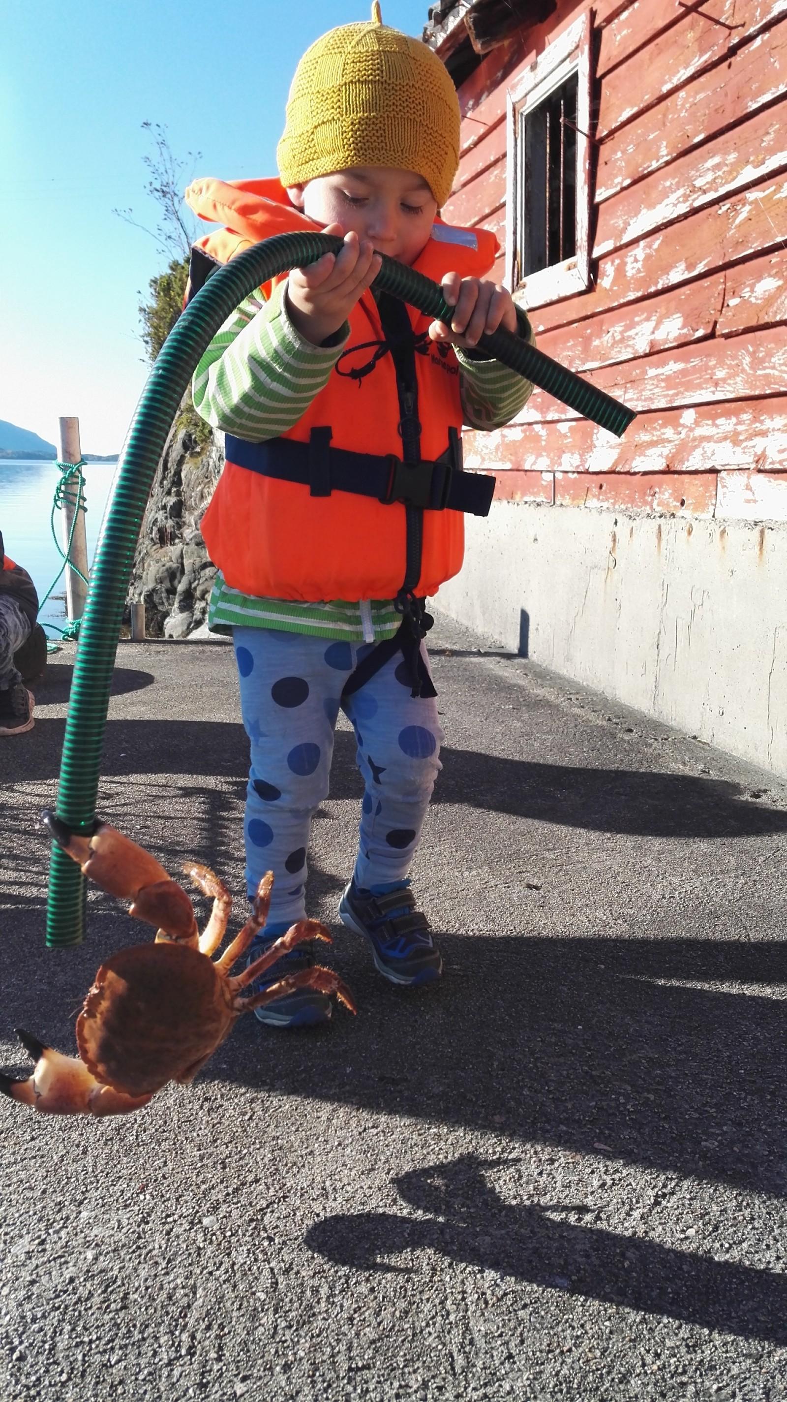 Stolt 3-åring med krabbe, fanga i eiga krabbeteine i Vevring.