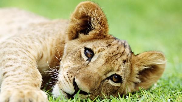 Bilde for Digge dyr