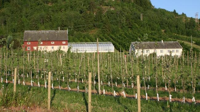 Forsøksgarden på Njøs, der mange nye fruktsortar er utvikla. Foto:Ottar Starheim, NRK.