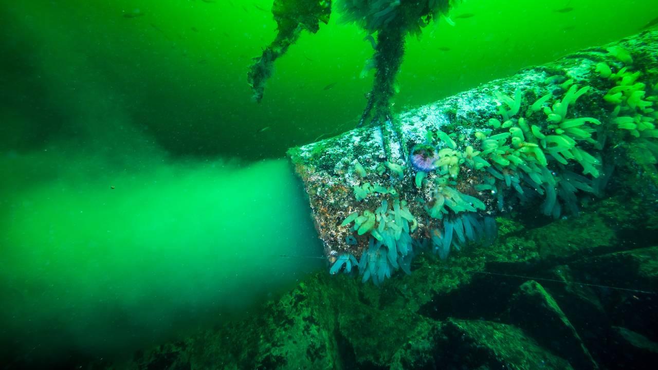 Utslipp av kloakk fra oppdrettsanlegg fra et rør i havet