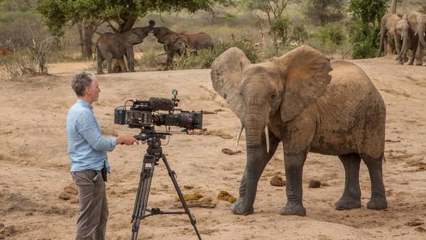 Disse elefantene har god grunn til å frykte menneskene