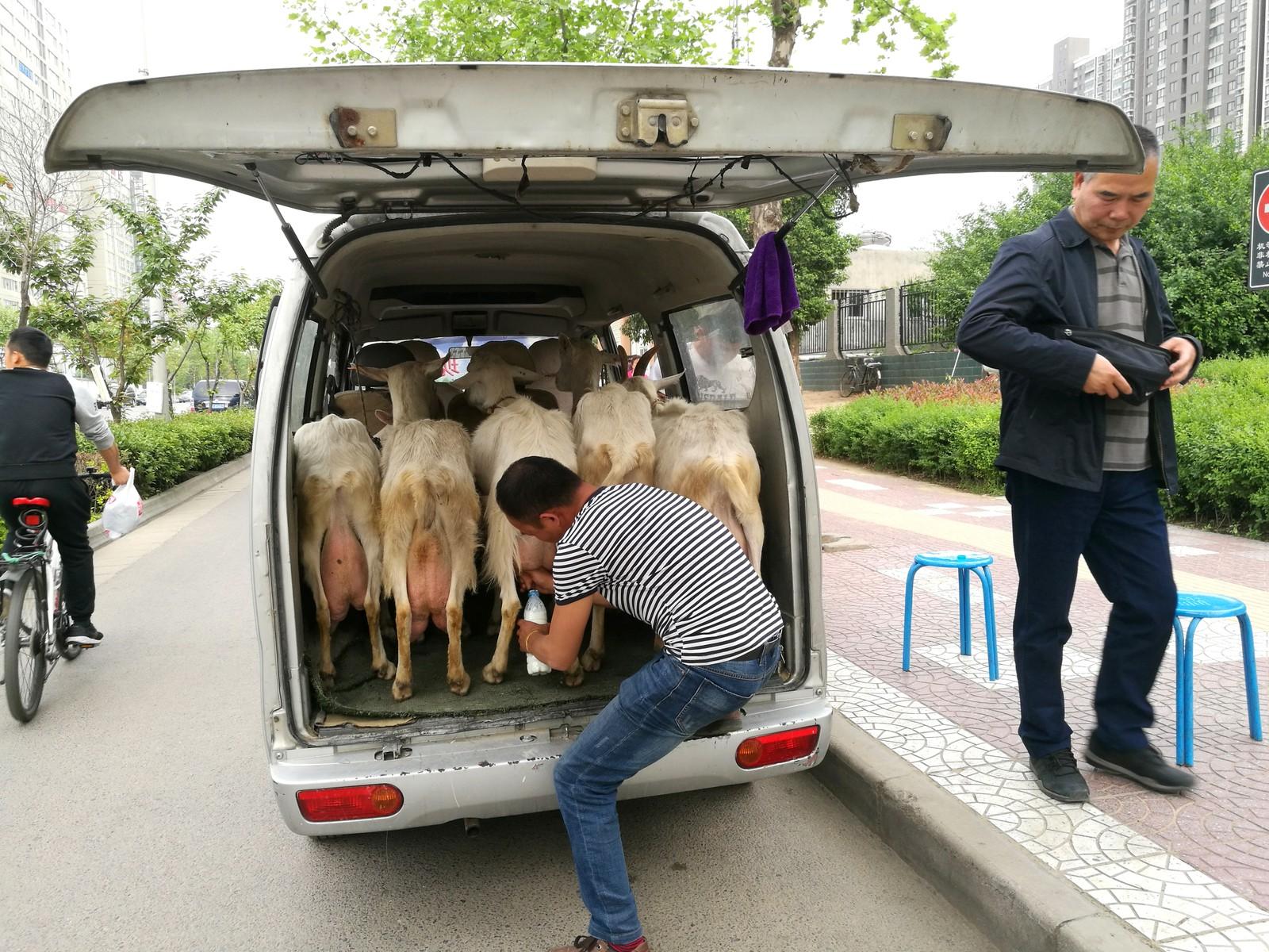 En mann selger fersk geitemelk i XI'an i Kina.