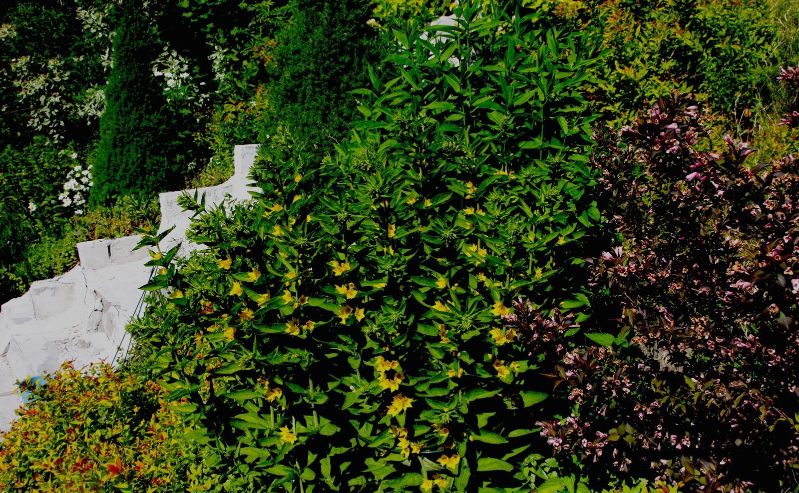 Trapper og stier knytter sammen hagen.