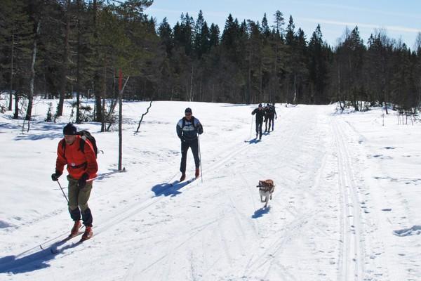 Skiføret holder seg lenge innover mot Kobberhaughytta - Foto: Hallgrim Rogn