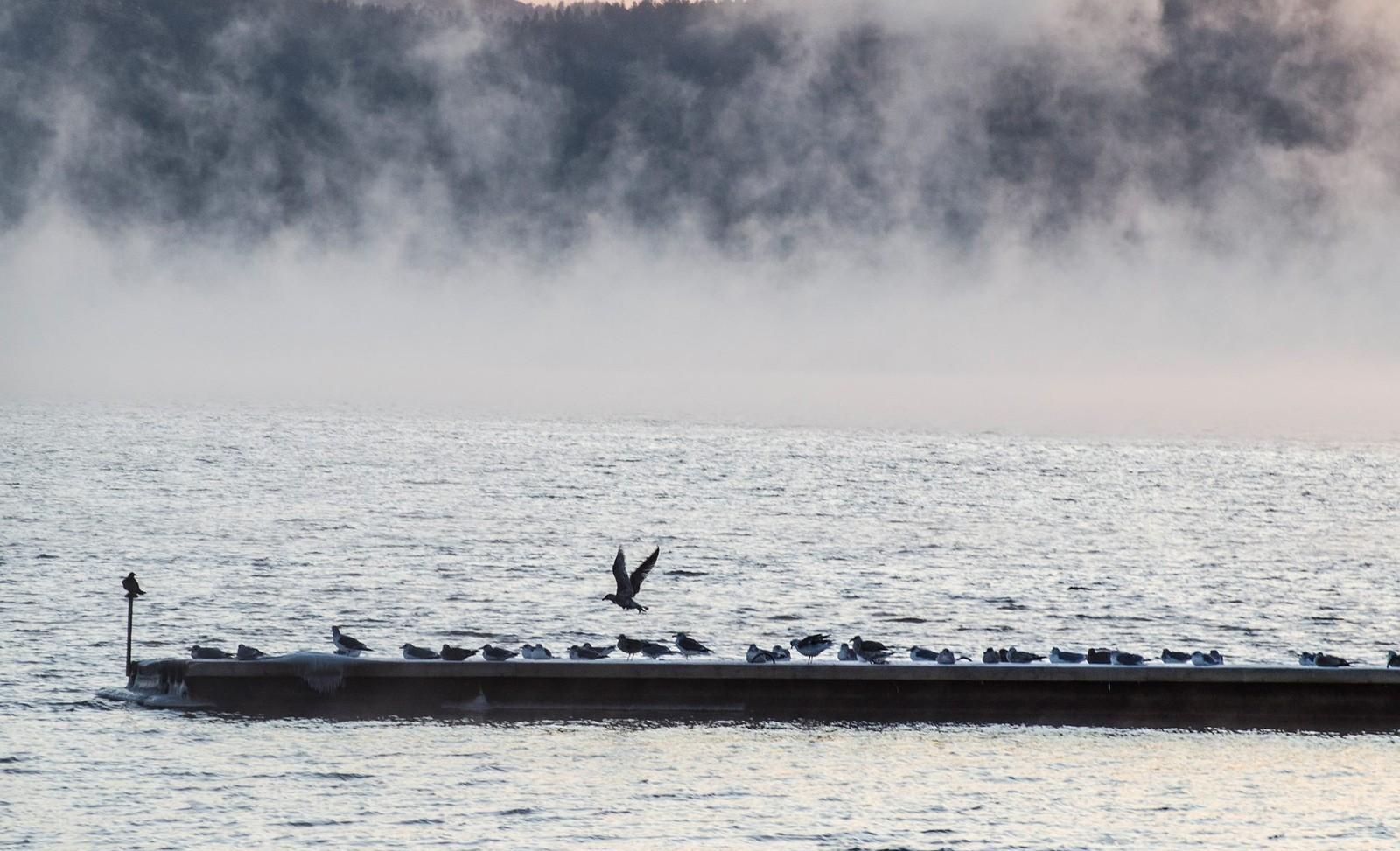 Fugler i frostrøyk