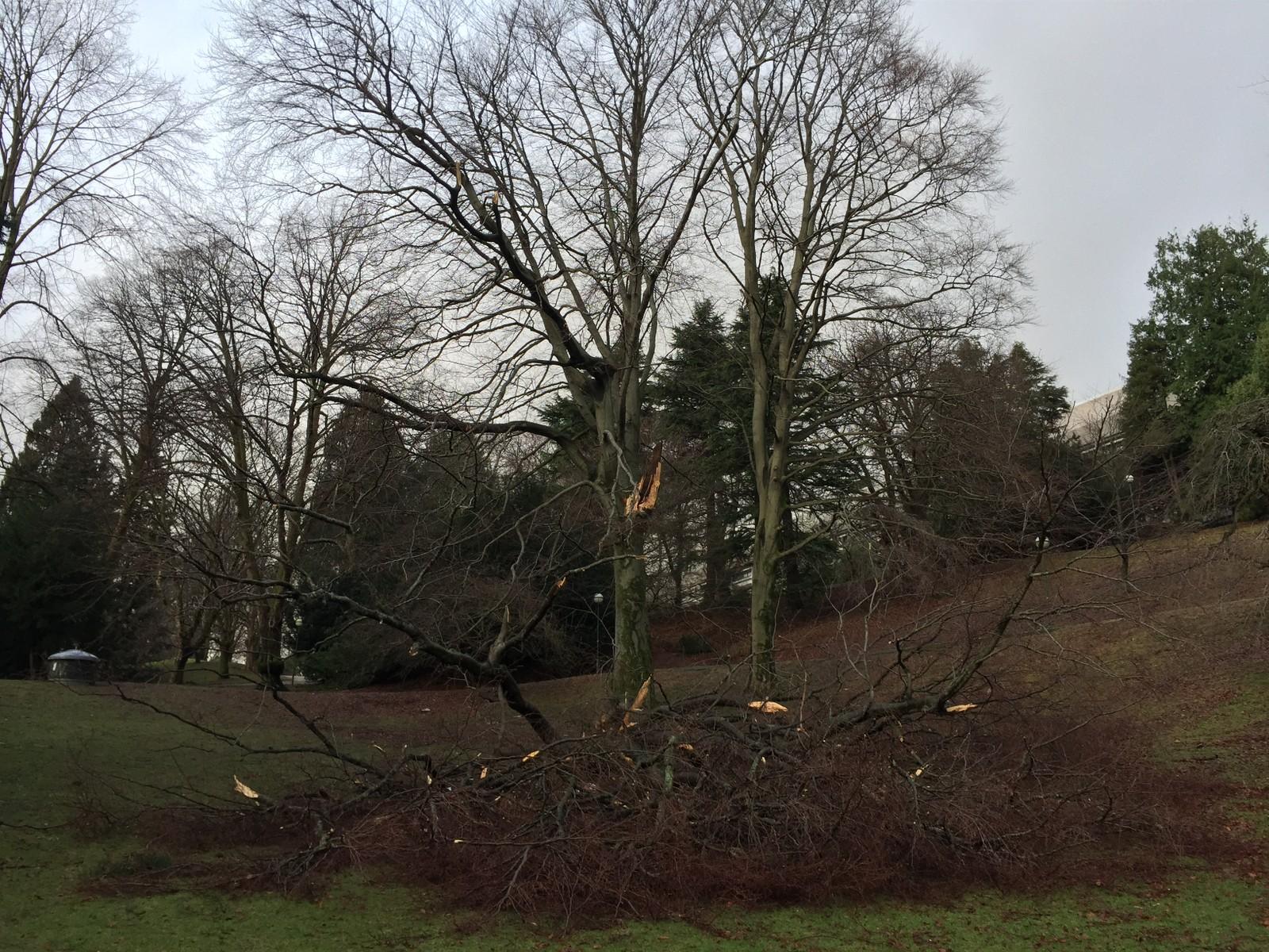 Vinden har gjort skader i Nygårdsparken.
