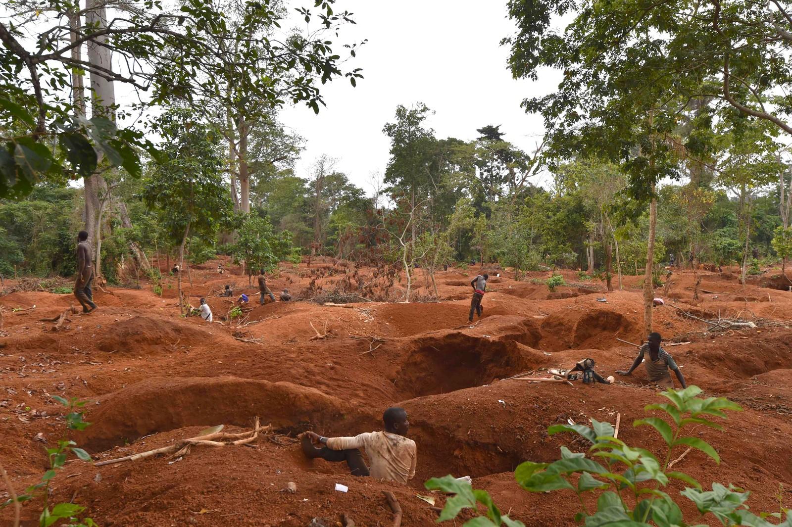 Trær har blitt rykket opp med røttene, og gullgravere forsøker å finne lykken i hullene nær Dimbokro på Elfenbenskysten den 15. august.