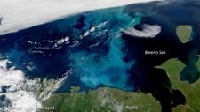 Satellittbilde fra den amerikanske forskningsinstitusjonen NOAA. Virvlene i blått og turkis i Barentshavet er planteplankton, som trives i næringsrikt arktisk farvann.