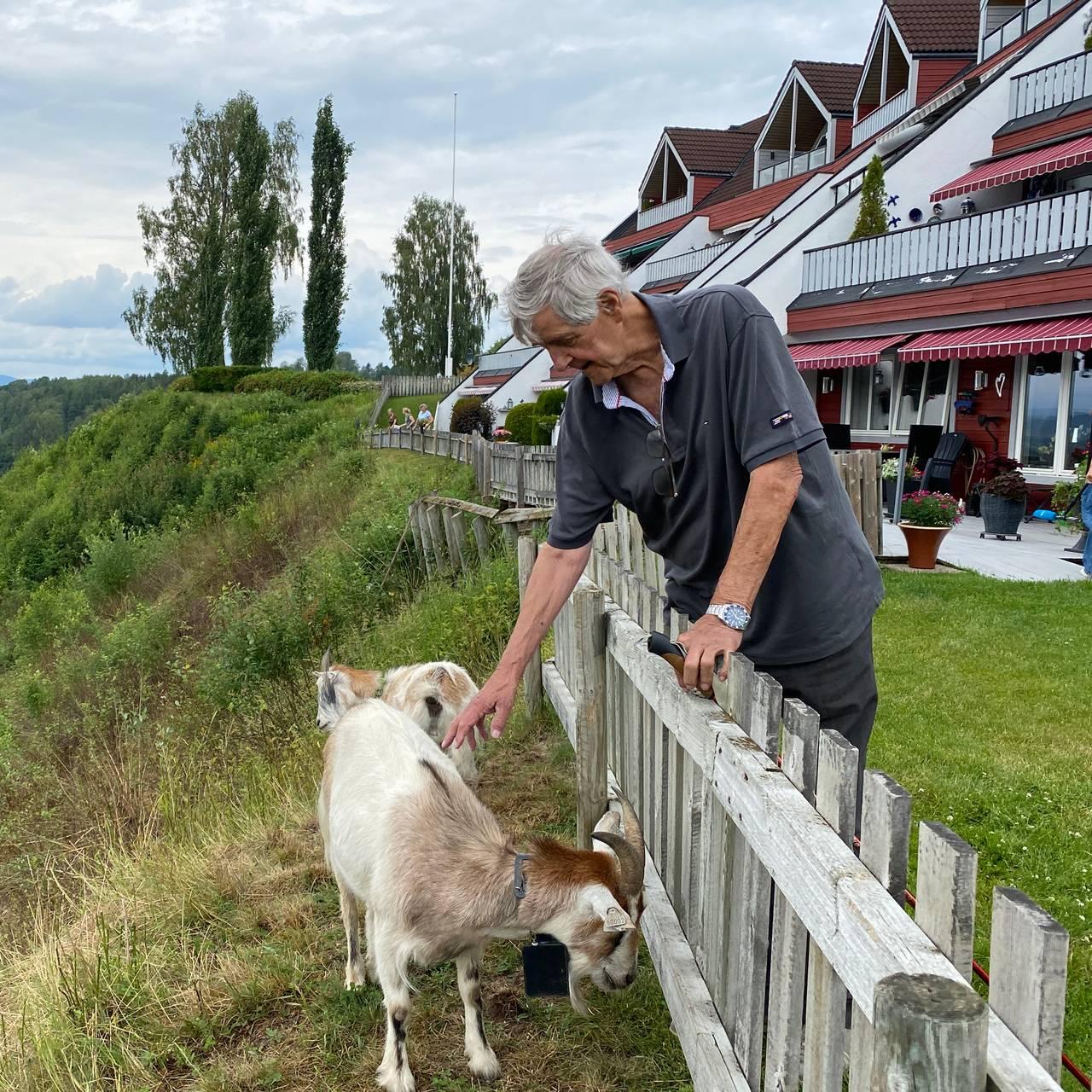 Ivar Kulseth klapper en geit over gjerdet.