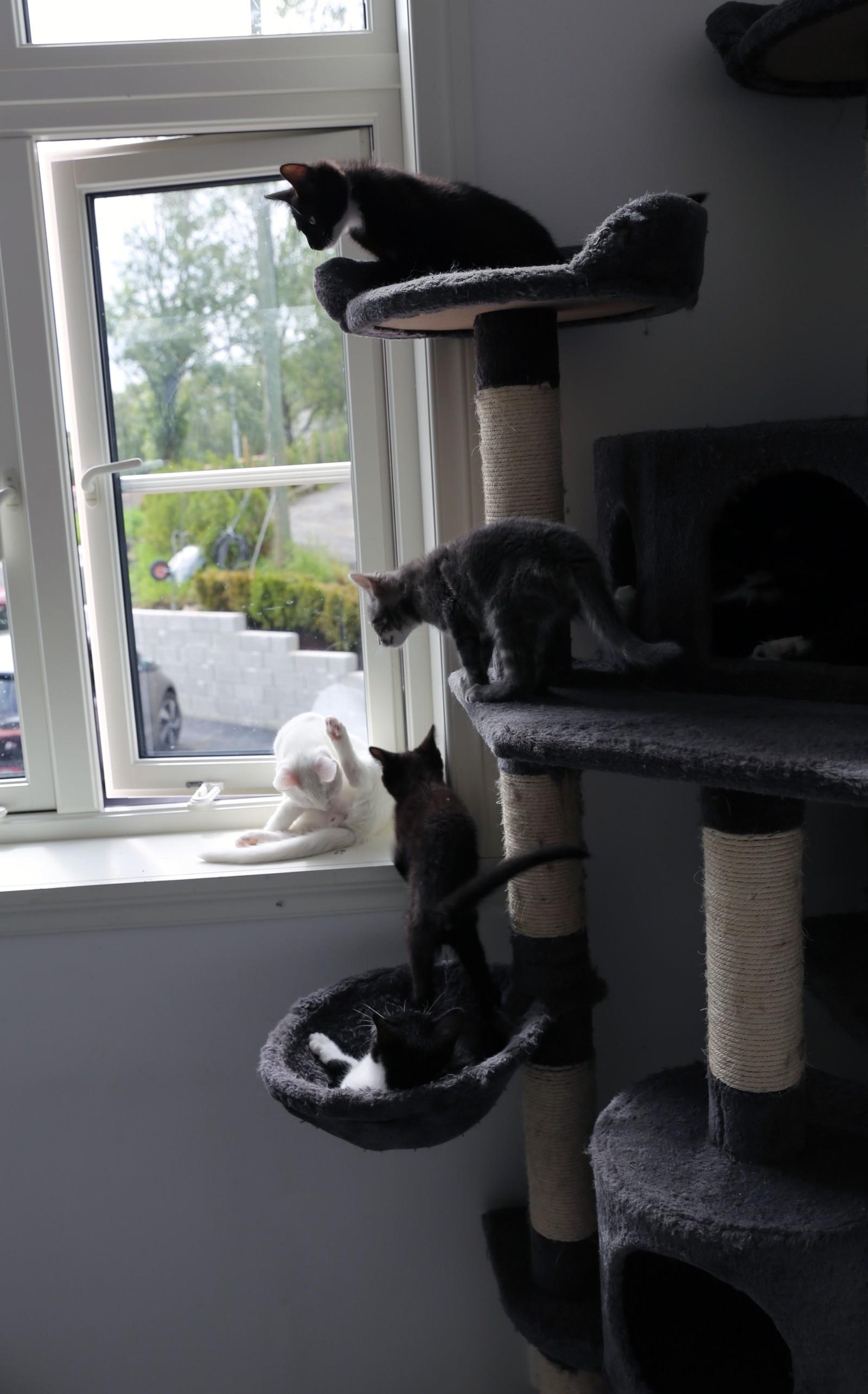 LUFTIG: Kattene bor både landlig og romslig. Men kapasiteten til Dyrebeskyttelsen Norge avd. Bergen og Hordaland er sprengt.
