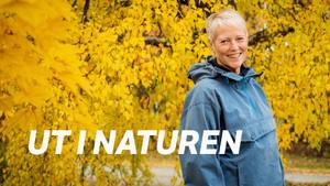 Ut i naturen: Trøbbel