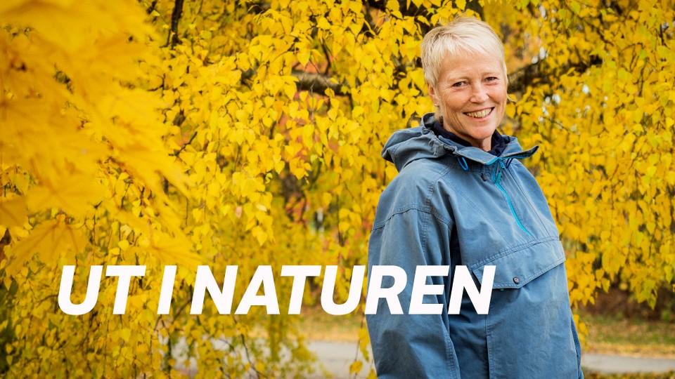 Ut i naturen: Kvinner i grønt