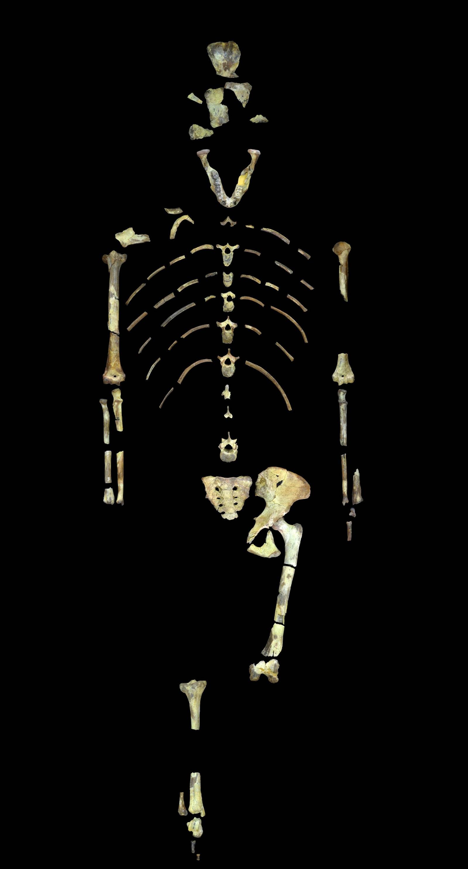 Dette er Lucy og hun er 3,18 millioner år gammel. Levningene hennes er de eldste restene av en menneskeape vi har.