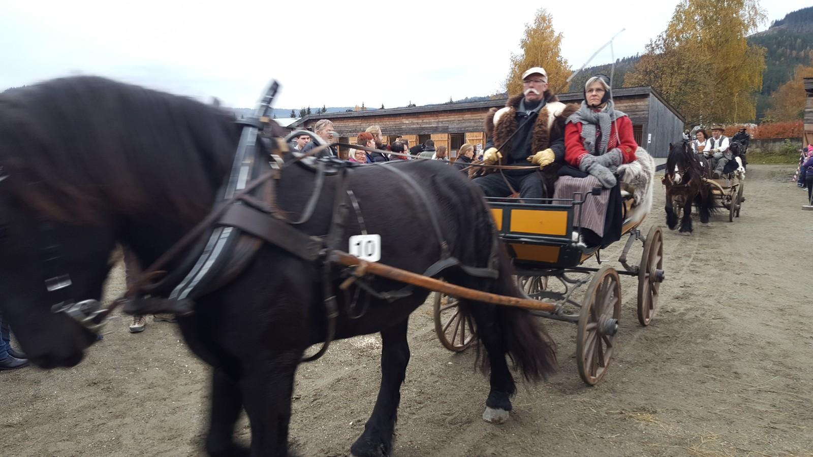 HESTER: Hester har alltid vært et viktig innslag på Stavsmartn i mer enn 200 år.