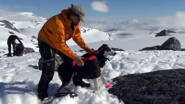 Slik slår du opp telt på snø – NRK