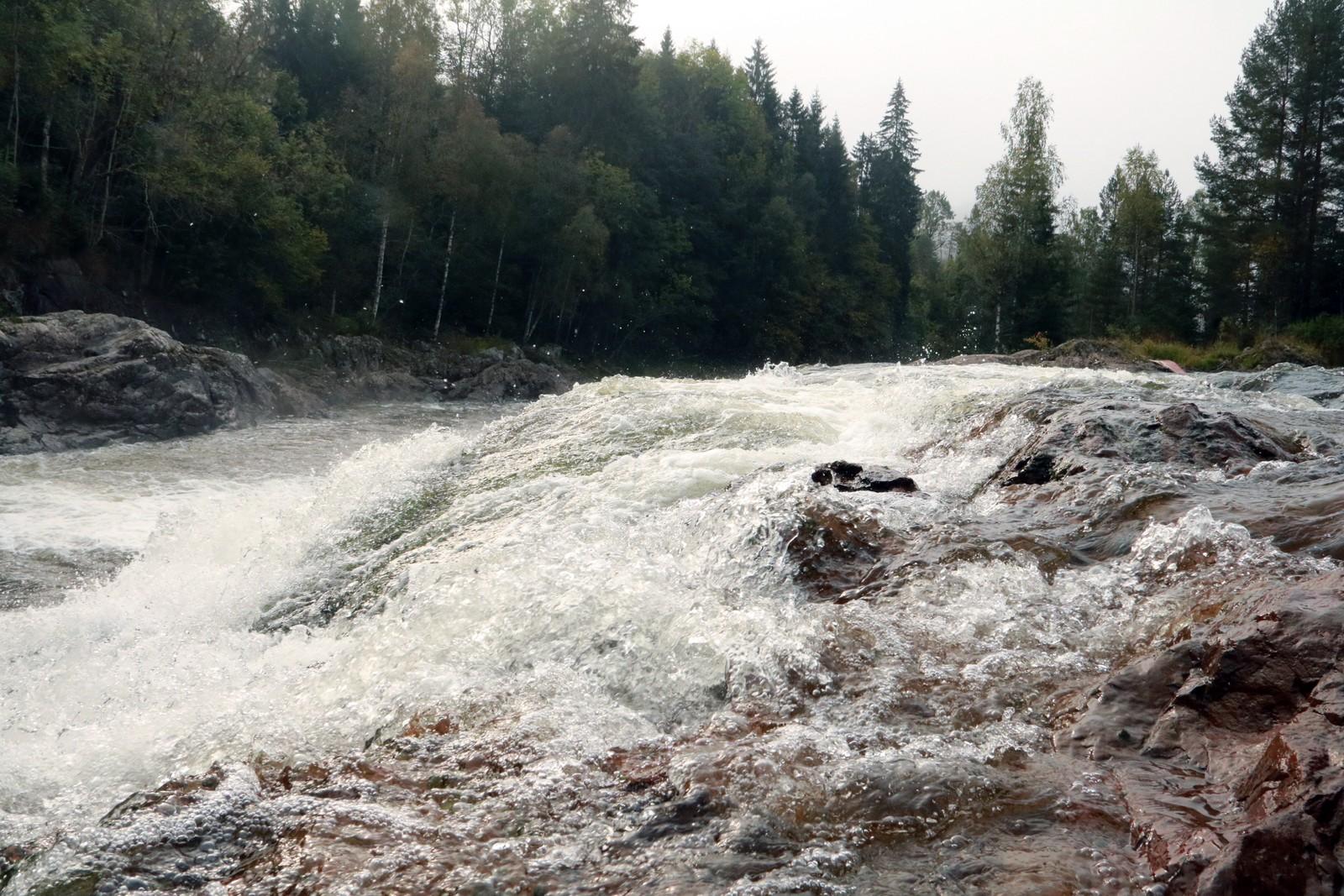 GODT FISKE: Det er fanget 22 tonn laks totalt i Numedalslågen hittil i år, opplyser Ole Petter Skjerven i Kjærra Laxefiske.