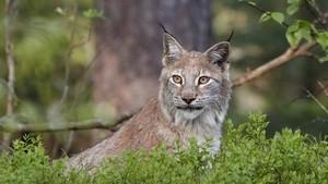Ut i naturen: Jakten på de fire store
