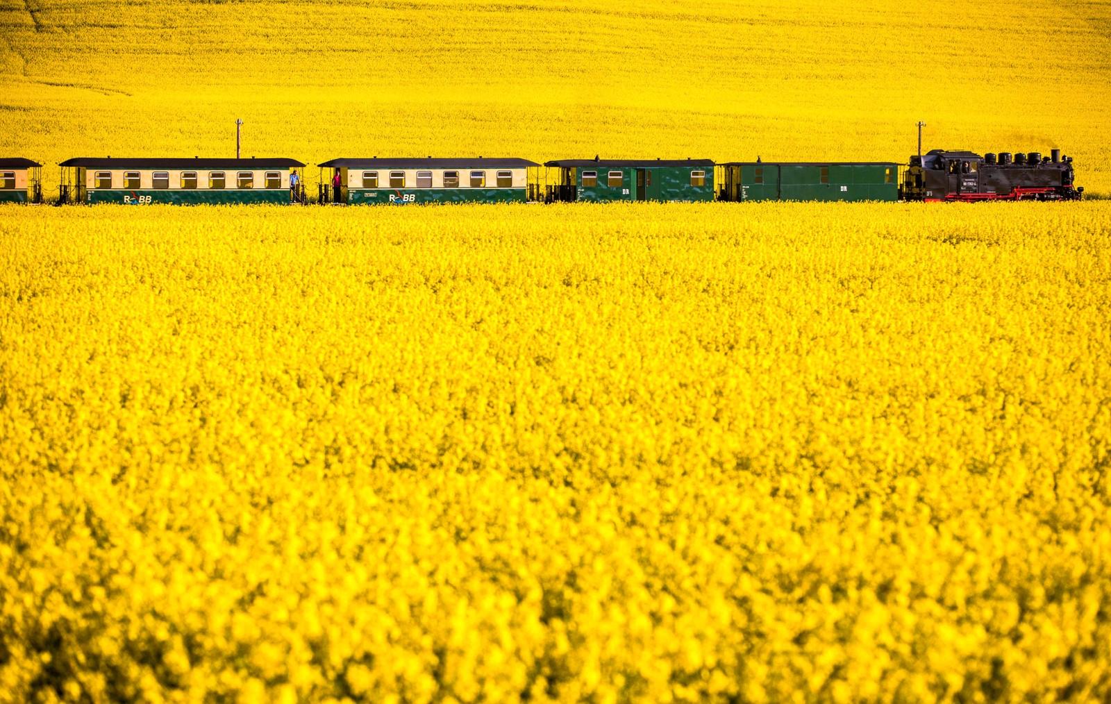 Et damplokomotiv av typen 99 1782-4 fra 1953 tøffer gjennom et landskap ved Posewald i Tyskland.