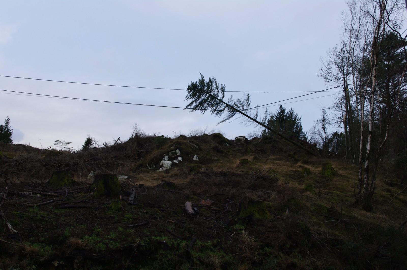 Eit vanleg syn dagen derpå i Hordaland. Eit tre har velta over kabel, også frå Austrheim.