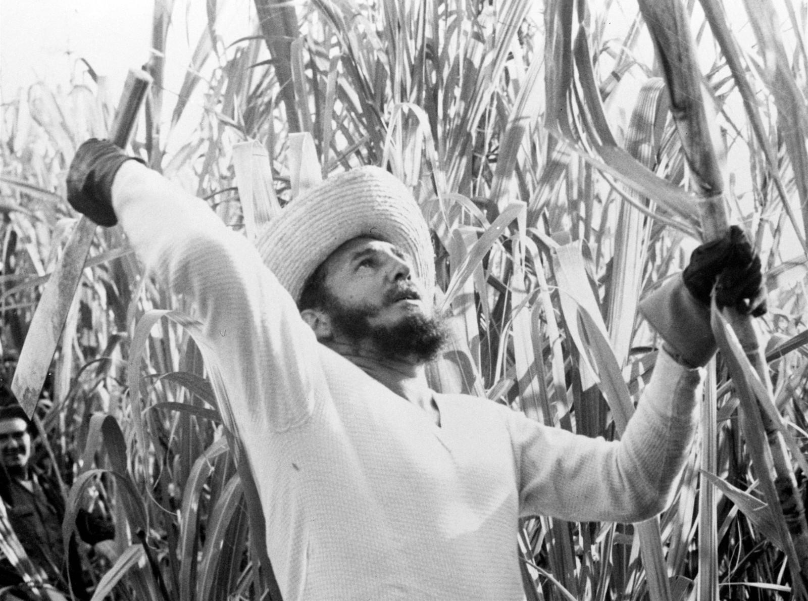 I 1961 innledet de sosialistiske makthaverne en propagandakampanje for å mobilisere cubanere til å delta i sukkerinnhøstingen. Sukker har alltid vært en viktig handelsvare for Cuba og den nye regjeringens mål var å produsere enda mer sukker. Tusenvis av frivillige meldte seg og i spissen stod landets leder, Fidel Castro.
