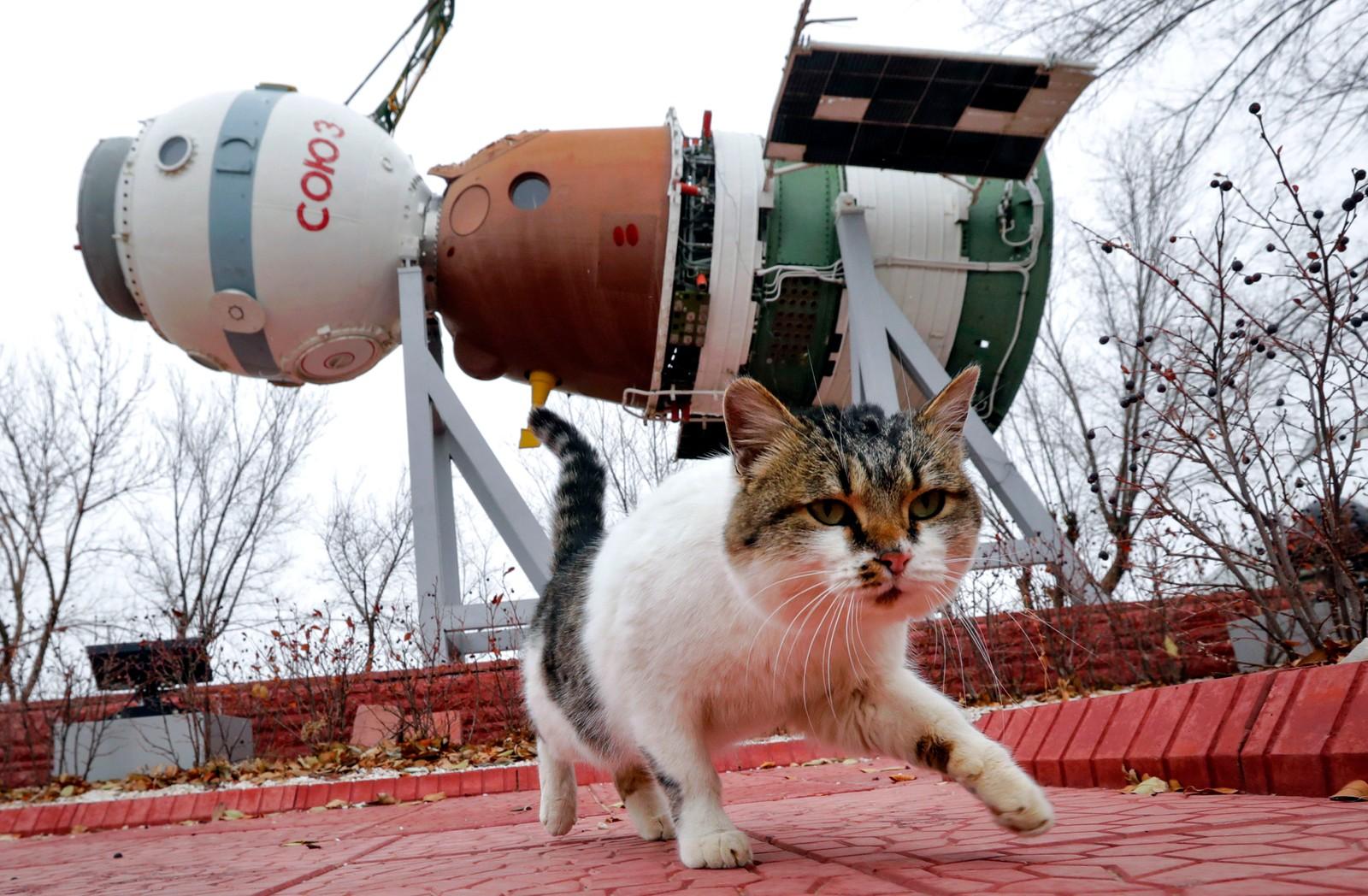En felis catus og en Soyuz-rakett ved et museum i Kazakhstan. En ny Soyuz-rakett skal snart ta med seg franske Thomas Pesquet, Russiske Oleg Novtskij og amerikanske Peggy Annette Whitson til Den internasjonale romstasjonen.