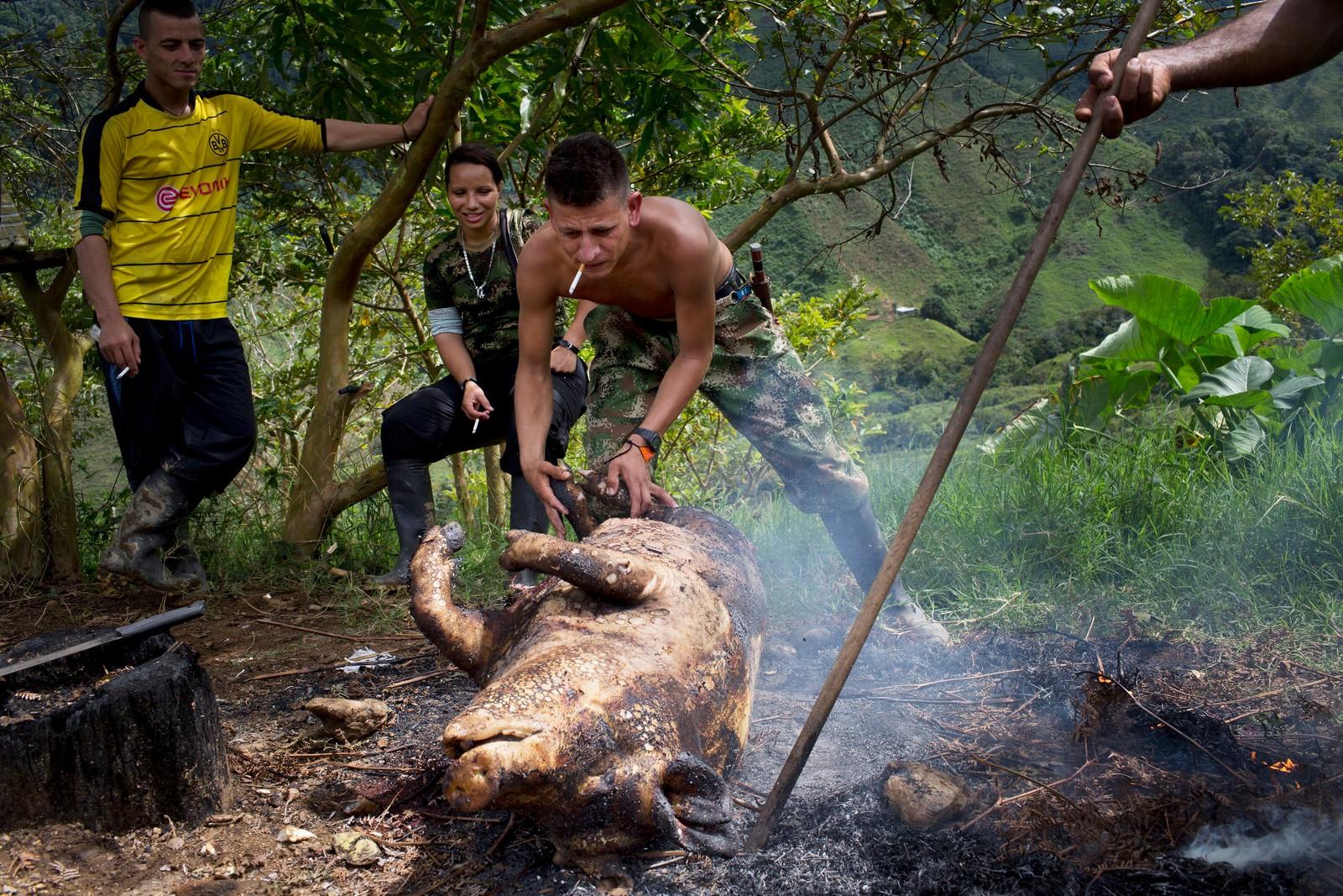 Harrison, et medlem av Farc-geriljaen i Colombia, drar en gris til et bål for å svi av dennes kroppshår. Kjøtt fra dyret skal kunne mette de 26 medlemmene i denne gruppen i flere dager.