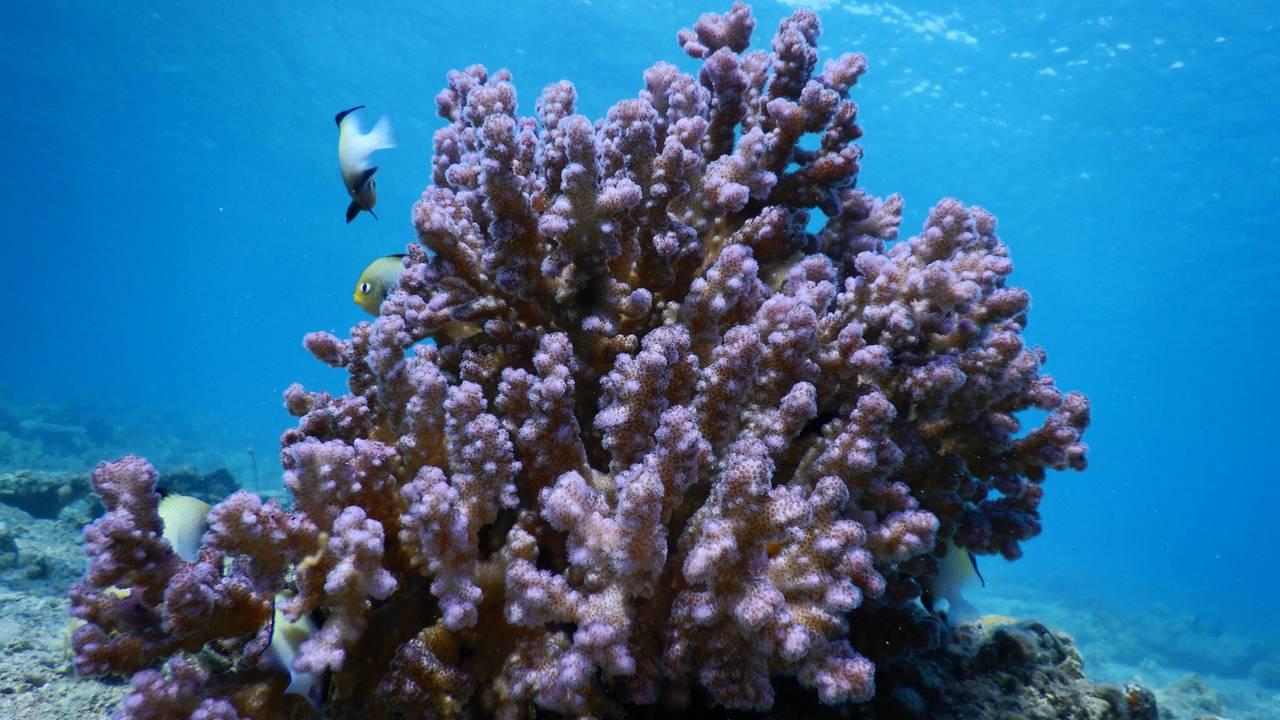 Korallrev i rødehavet 3